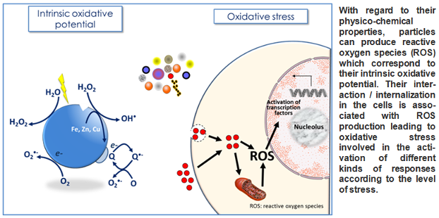 <multi> [fr] Particules et stress oxydant [en] Particles and oxidative stress </multi>